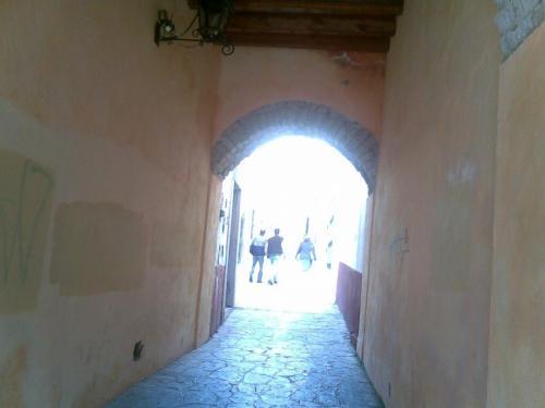 Amevasc Zacatecas 8